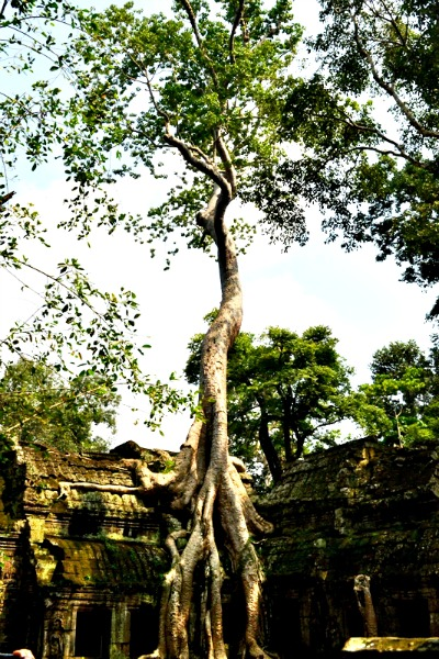 Ta Prohm means 'Old Brahma', the Hindu god of Creation.