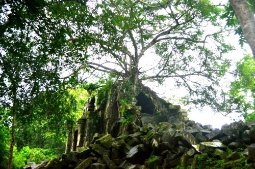 For all its seemingly wild outgrowths, Beng Mealea is a quiet temple and well worth the additional US$5 as this is not included in the Angkor pass.